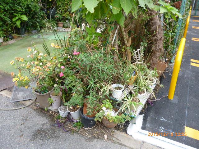 植木鉢処分
