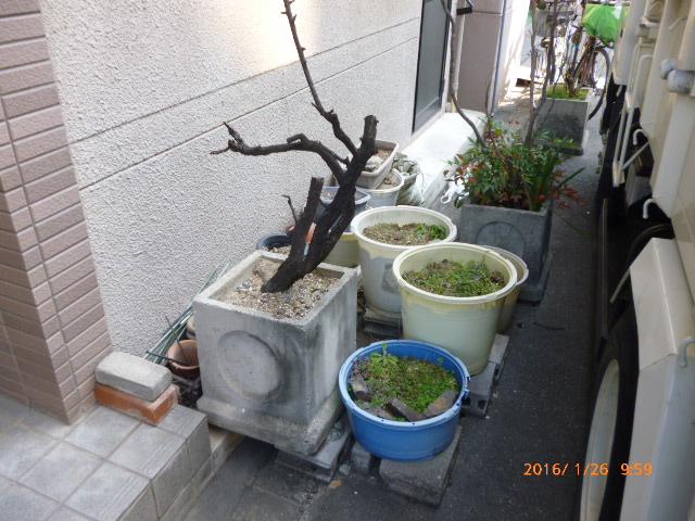 植木鉢、コンクリート処分